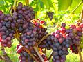 019_wine02