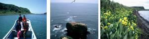 kodawari_stay03_island