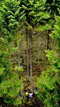 kodawari_stay04_forest